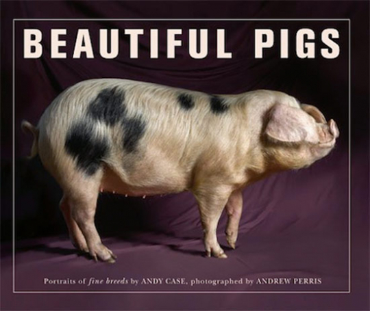 Beautiful Pigs. Schöne Schweine. Porträts ausgezeichneter Rassen.