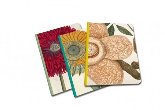 Bemerkenswerte Pflanzen. 3 kleine Notizbücher.