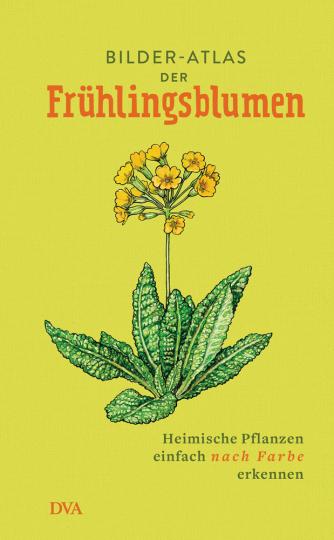 Bilder-Atlas der Frühlingsblumen. Heimische Pflanzen einfach nach Farbe erkennen.