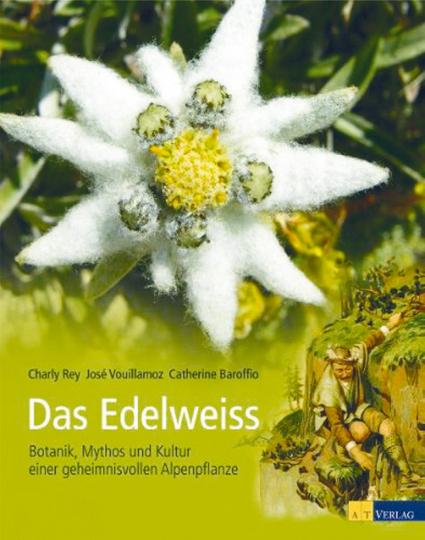Das Edelweiss - Botanik, Mythos und Kultur einer geheimnisvollen Alpenpflanze