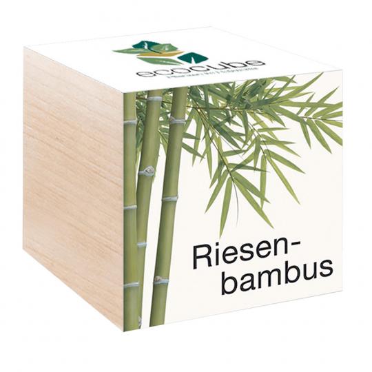 Holzwürfel mit Riesenbambus-Samen.