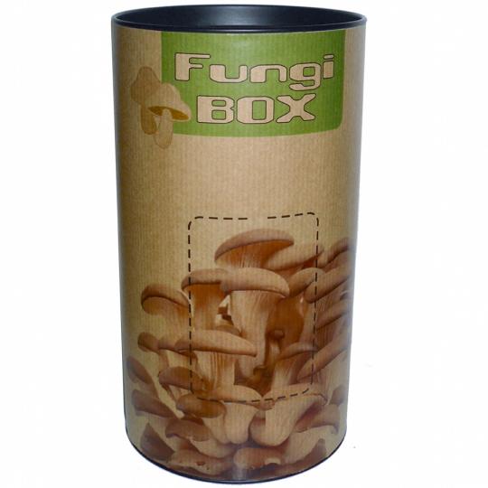 Anzucht-Set für Pilze »Fungi-Box«.