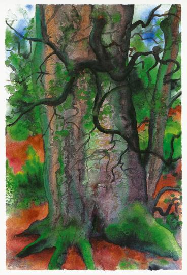 Günther Grass. Bäume III.
