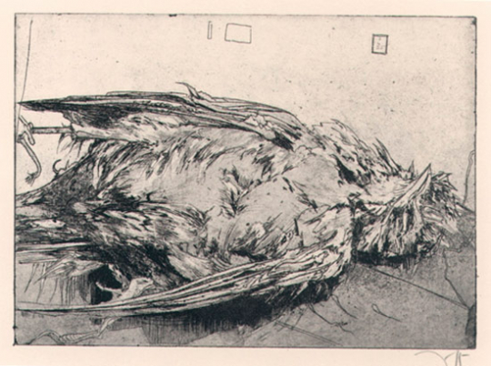 Horst Janssen. Toter Vogel.