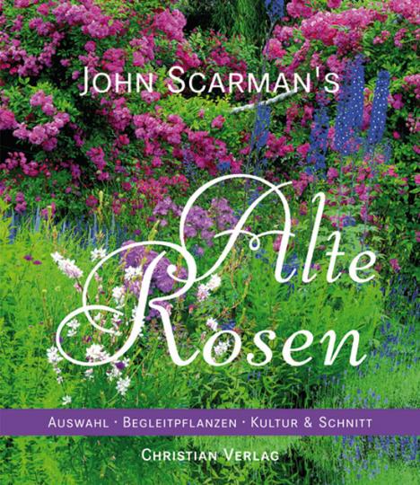 John Scarman's Alte Rosen.