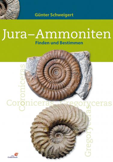 Jura-Ammoniten. Finden und bestimmen.