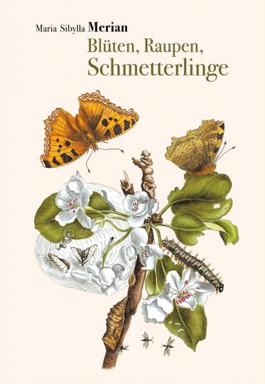Maria Sibylla Merian. Blüten, Raupen, Schmetterlinge. Der Raupen wunderbare Verwandlung.