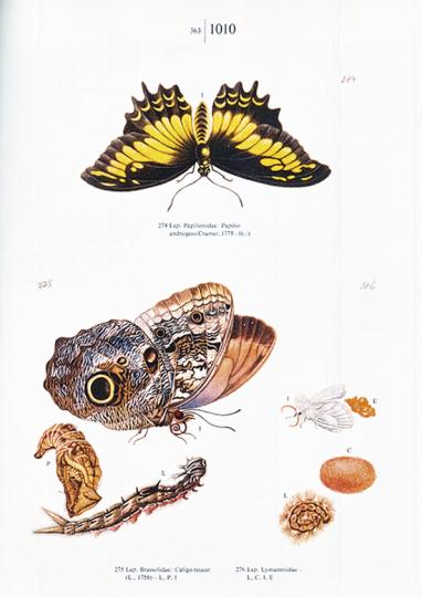 Maria Sibylla Merian. Schmetterlinge, Käfer und andere Insekten. Leningrader Studienbuch.