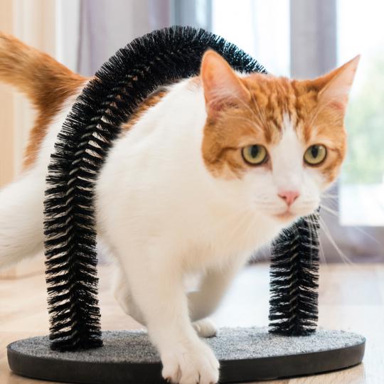 Fellpflege-Bogen für Katzen.