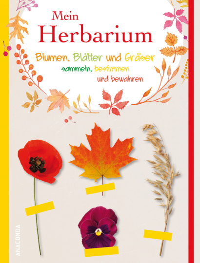 Mein Herbarium. Blumen, Blätter und Gräser sammeln, bestimmen und bewahren.