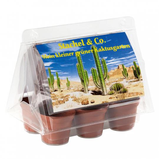 Mini-Gewächshaus »Kaktus & Stachel«.