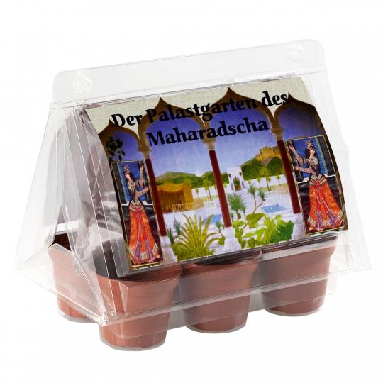 Mini-Gewächshaus »Palastgarten des Maharadscha«.