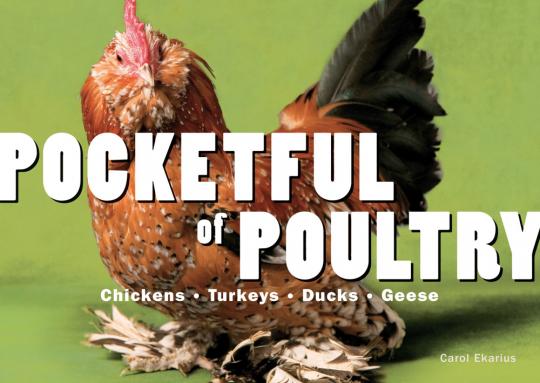Pocketful of Poultry. Ein Sack voll Federvieh. Hühner, Truthähne, Enten, Gänse.