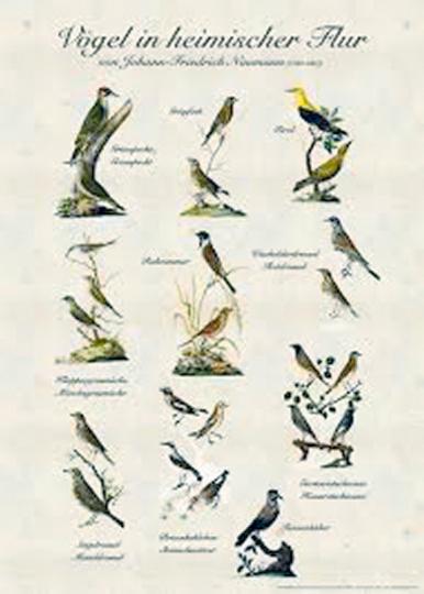 Poster »Vögel in heimischer Flur«.