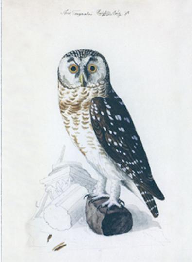 Postkartenbuch 14 Eulen - von Johann Friedrich Naumann