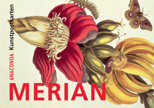 Postkartenbuch Maria Sibylla Merian.