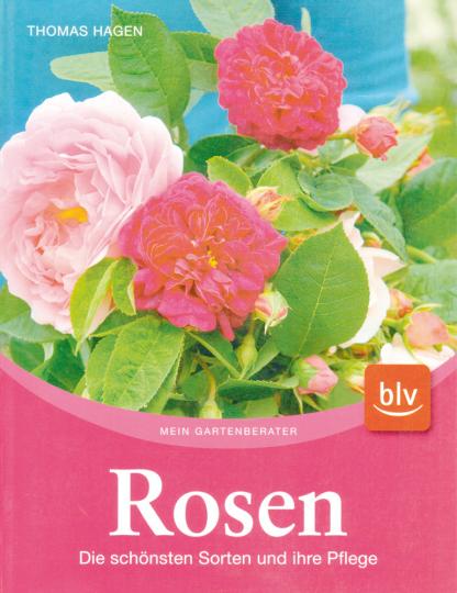 Rosen - Die schönsten Sorten und ihre Pflege.