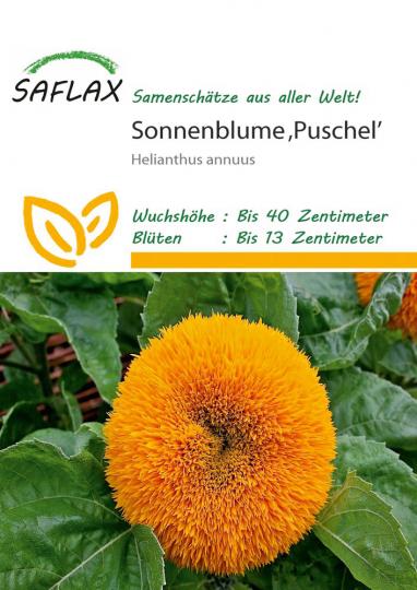 Samen »Sonnenblume Puschel«.