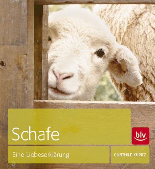 Schafe - Eine Liebeserklärung