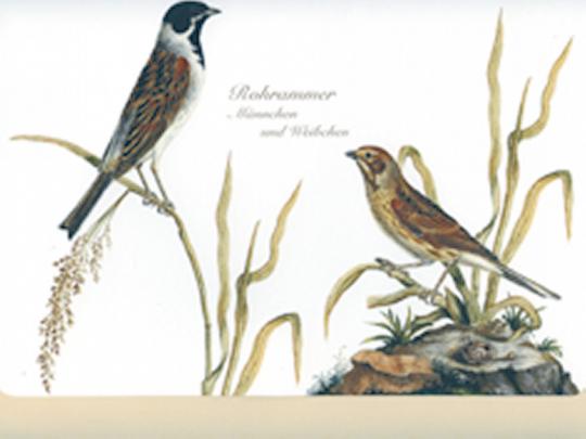 Schreib-Set Wald- und Wiesenvögel