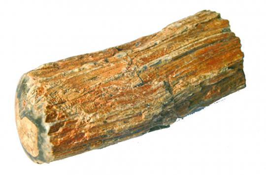 Versteinertes Holz.