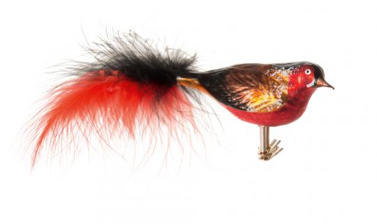 Vogel rot schwarz mit roter und schwarzer Feder.