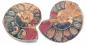 Ammonit, geteilt und poliert, 3-5 cm Bild 1