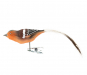 Buchfink Glasvogel. Bild 1
