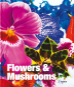 Flowers & Mushrooms. Blumen & Pilze. Bild 1