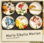 Glasmagnete »Maria Sibylla Merian«. Bild 1