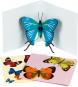 Pop-up-Grußkarten-Set »Die Schmetterlinge«. Bild 1