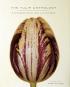 Tulip Anthology. Anthologie der Tulpe. Bild 1