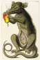 Albertus Seba - Das Naturalienkabinett - Vollständige Ausgabe der kolorierten Tafeln 1734-1765 Bild 2