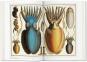 Albertus Seba. Cabinet of Natural Curiosities. Das Naturalienkabinett. Bild 2