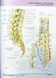 Atlas der Anatomie. Bild 2
