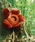 Botanic Gardens. Botanische Gärten. Arche Noah unserer Zeit. Bild 2