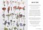 Das kleine Herbarium - Ein Buch zum Sammeln, Erinnern und Bewahren Bild 2