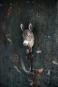 Deko-Haken Esel. Bild 2