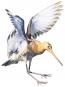 Der große Vogelatlas - Alle europäischen Arten. Bild 2