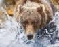 Die letzten Wildnisse der Erde - Die faszinierendsten Nationalparks und Naturreservate der Welt Bild 2