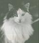 Doris Lessings Katzenbuch. Katzenportraits von Isolde Ohlbaum. Bild 2