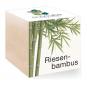 Holzwürfel mit Riesenbambus-Samen. Bild 2