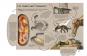 Entdecke die Welt der Dinosaurier. National Geographic KiDS. Bild 2