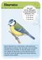 Expedition Natur. 50 heimische Vögel. Entdecken und bestimmen. Bild 2