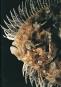 Farbenmeer. Faszinierende Nahaufnahmen der Unterwasserwelt. Bild 2