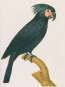 Georges-Louis Leclerc, Comte de Buffon. Birds. Bild 2
