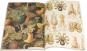 Geschenkpapier Kunstformen der Natur. Bild 2