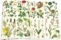 Geschenkpapier »Flora«. Bild 2