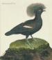 Geschichte der Vögel. Histoire des Oiseaux. Bild 2