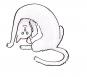 Große Katzen, kleine Katzen. Ein bebilderter Überblick über die Katzen dieser Welt. Bild 2